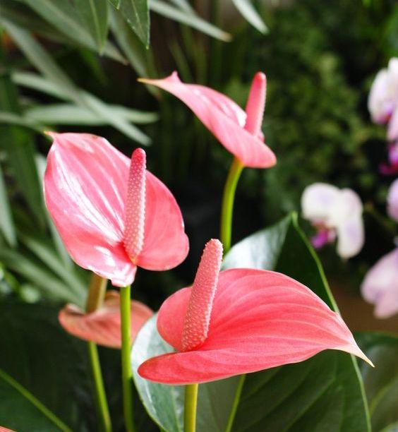 Foolproof Flowers