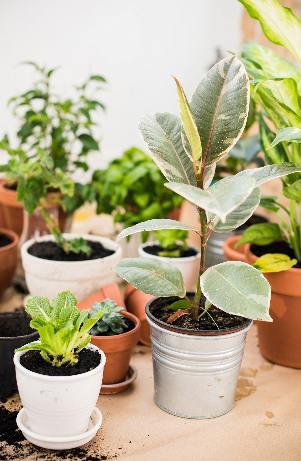 House Plant Pro